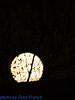 Bristol-08481 (John French - Happy Snapper) Tags: bristol evening night streetlights moon swans river harbourside
