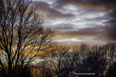 Winter Sunset (Photographybyjw) Tags: winter sunset bare trees colorful clouds mark cold north carolina photographybyjw rural country foliage cloud color usa