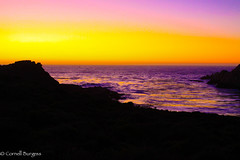 IMG_3644 (CornellBurgessphotography) Tags: seascapes bigsur pointlobos carmelbay california pacificocean montereybay cornellburgess