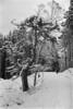 dsc05427jpg_24660786041_o (idreamedof) Tags: agfa agfavistaplus200 bwfilm badenoch cairngormsnationalpark ewan himatic7s highlandsofscotland inshriach linda mf minolta sam scotland scottishhighlands sulekhamillar thain toby uk analogue atmosphere family film nature peopleiknow plants snow tree trees weather woodland