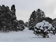 Lisle, IL, Morton Arboretum, Landscape after the Snowstorm (Mary Warren 9.8+ Million Views) Tags: lisleil mortonarboretum winter garden park landscape snow nature flora plants trees evergreens