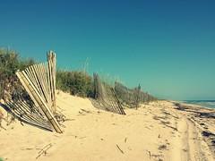 Florida beach (beachdays55) Tags: florida beach floridabeach canaveralnationalseashore nature naturalbeach dunes