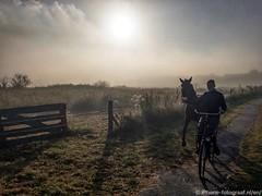 Morning Ride (iPhone Fotograaf) Tags: animal horse pony groningen horsebackriding dutch morning lamp sky fog