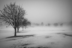 New England Weather (madre11) Tags: weather foggymornings winterlandscape winterinnewhampshire changing snow newhampshire newengland candianewhampshire newhampshirelandscape new england nature trees foggy landscape blackandwhite