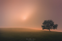The tree and the sun (Mimadeo) Tags: tree lonely fog solitary dreamy foggy misty mist branch bare nature landscape morning trunk light solitude tranquility sunlight copyspace magic sun meadow mysterious spooky fantasy fairy ethereal magical mystical gloomy
