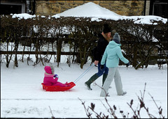 A morning for sledging. (Country Girl 76) Tags: snowing sledging winter towpath skipton yorkshire