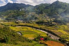 Údolí Muong Hua plné rýžových teras (zcesty) Tags: řeka vietnam26 terasa rýže pole krajina hory vietnam dosvěta làocai vn