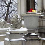 Lions in winter thumbnail