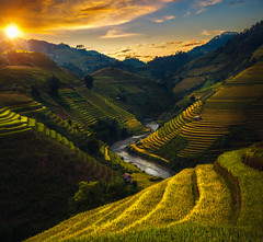 Rice field and rice terrace in Mu cang chai (anekphoto) Tags: vietnam rice sapa landscape field nature green travel food plant chai terrace agriculture mu cang asia mountain plantation environment valley farm rough lao terraced fields leaf japan management thailand asian curve land indochina china outside bali earth ecology myanmar soil saigon ground system control cambodia burma farmer malaysia horticulture local