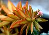 Planting Fields... (angelakanner) Tags: canon70d lensbaby velvet56 plantingfields longisland flowers greenhouse