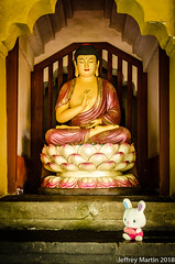 (Dubai Jeffrey) Tags: baoensi buddha china buddhist doll jiangsu offering statue stuffedtoy suzhou temple 报恩寺