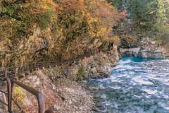 DSC_2626 (juor2) Tags: japan maple d4 nikon scene unazuki toyama onsen river train travel