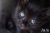 Combawa (Ark. Us.) Tags: cute kitten kitty blue eyes baby feline black portrait whiskers adorable