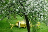 Apple blossoms and yellow chairs (gornabanja) Tags: chairs yellow garden apple blossoms tree appleblossoms appletree spring nature nikon d70