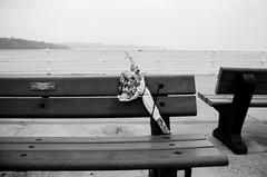 Favourite Bench (Richie Rue) Tags: nikonf801s remember remembrance memorial memories poignant flowers bouquet seat bench seaside pier haiku art fineart monochrome mono blackandwhite film analogue analog nograinnoglory ishootfilm istillshootfilm