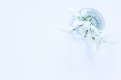 38/365: Snowdrops (judi may) Tags: 365the2018edition 3652018 day38365 07feb18 highkey whitebackground whiteonwhite white snowdrops flowers vase glass negativespace lessismore minimal minimalist minimalism simplicity simple less stilllife tabletopphotography canon7d macro dof depthoffield bokeh