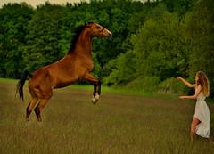 SHOOTING (Gila98) Tags: shooting fotoshooting pferd reiterin kleid sommer wiese wald mädchen frau