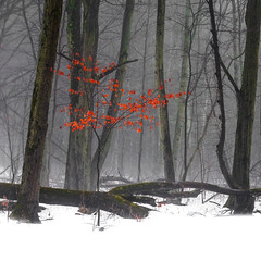 Not the Red Forest (aT0Mx) Tags: tree red landscape presquile provincialpark brighton ontario canada leaves winter snow forest calm square pentax pentaxart pentaxlens k5 55300mm fog nature