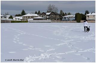 Walk In The Snowy Weekend - Park XP7636e