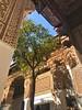 Bahia Palace, Marrakech, Morocco. (Nina_Ali) Tags: orangetree bahiapalace morocco marrakech february2018