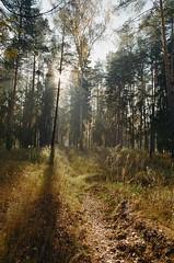 000116400018 (MatveyKarmakov) Tags: nikon nikonf3 kodak 35mmfilm morning film analog filmisnotdead filmphotography filmphoto filmcamera filmlandscape filmcommunity onfilm ishootfilm wood forest folk livefolk