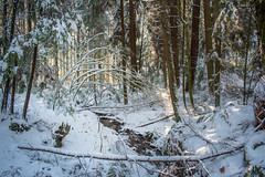 Stanley Park Snow Day (miss604) Tags: stanley park explorebc vancouver veryvancouver