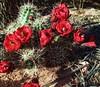 IMG_E2222 (ira.saturn) Tags: utah canyonlands needles usa mesaarch stones