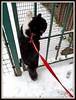 L'arrampicatrice...sociale?? (magister111) Tags: snow cats gatti miao winter