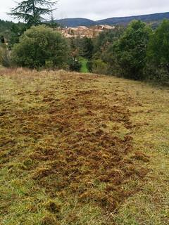 Wild boar rootings, Hameau de Pebrieres