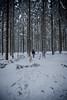 HM2A7509 (ax.stoll) Tags: feldberg frankfurt taunus mountain forest snow winter winterwonderland outdoor nature dog hovawart trees street wanderlust travel