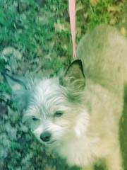 IMG_9057 (earthdog) Tags: 2018 dog pet animal liveanimal needstags needstitle canon canonpowershotsx720hs powershot sx720hs