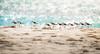 Cayo de Agua | Archipiélago Los Roques (Mario Graziano) Tags: venezuela ve losroques arcipelago caraibi corallino isola mare sabbia spiaggia archipiélago caribe cays isla mar arena sea playa archipelago caribbean coralino island sand beach animal animals wild selvatico selvatici wildlife wilderness wildanimal