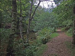 Fisherman's Path and River Teign in Teign Gorge (Philip_Goddard) Tags: views scenery landscapes woodland wood valley river europe unitedkingdom britain british britishisles greatbritain uk england southwestengland devon dartmoornationalpark drewsteignton teignvalley teigngorge fishermanspath riverteign