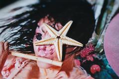 Echinoderm (Jetcraftsofa) Tags: nikonf4 vivitar5528macro sb24speedlight ektar100 35mm slr filmphotography starfish echinoderm flashphotography offcameraflash bjork surreal complementarycolors