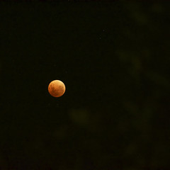 Red Blue Moon (Padmacara) Tags: eclipse moon red bluemoon d7100 tamron28300 night stars square explored