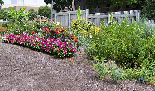 Purdue Horticulture Gardens 07-28-2017 93 - Flower Bed