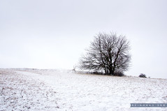 Niederösterreich Weinviertel Buschberg_DSC1263A (reinhard_srb) Tags: niederösterreich weinviertel buschberg niederleis oberleis winter schnee eis wegweiser kälte reif bewölkung wald hügel berg feld acker landschaft gestrüpp