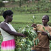 CIP Rwanda Good Nutrition  and Innovative Urban Farming Campaign