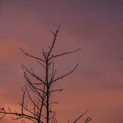 Kahle Bäume 02 (p.schmal) Tags: olympuspenf hamburg farmsenberne kahlebäume sonnenuntergang sundown