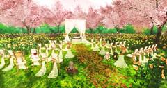 Sakura wedding (Kumomi) Tags: aphroditeshop senseevent littlebranch theliaisoncollaborative yourdreams whimsical