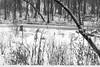 Winter (Walt Polley) Tags: 24120mmf4gednnikkor copyright©2018waltpolley minnesota nikond500 winter