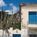 Cactus & Balcony - Andros, Greece