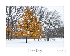 Snow Day (baldwinm16) Tags: february il illinois cold landscape midwest nature outdoors outside scenic season snow winter
