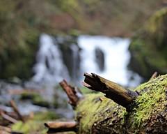 McDowell Creek Falls (dsgetch) Tags: bokeh depthoffield dof cascadia cascades mcdowellcreek mcdowellcreekfalls santiamriver santiam waterfalls falls oregon rivers oregonrivers pacificnorthwest pnw pnwlife pnwwonderland sweethome