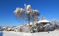snowy Village (*AdeCo*) Tags: winter baum tree schnee snow snowy verschneit haus village bluesky blau weiss himmel sonne sonnig sunny katze cat eichhoernchen squirrel dorf strasse street