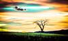 global warming (goodrich781) Tags: hot golden green apocalypse