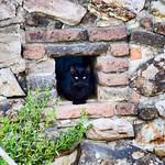Aquí te vigilan desde cualquier bujío #gatos #gatoscallejeros #cats #photocats #instacats #neko #meow #gatze #gatto #koshka #catsofworld #catsofinstagram #streetcats #chat #blackcat #gatonegro thumbnail