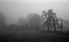 Waiting for light (Rosenthal Photography) Tags: dezember nebel herbst bnw schwarzweiss anderlingen gebäude natur bäume asa400 pflanzen ff135 35mm bauernhof wiese städte 20171202 ilfordhp5 bw olympus35rd analog rodinal150 dörfer siedlungen landscape moning mist fog december winter autumn mood blackandwhite trees fields fram olympus olympus35 35rd fzuiko zuiko 40mm f17 ilford hp5 hp5plus rodinal 150 epson v800