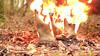 6 (sim_hom) Tags: burning aigle wellies