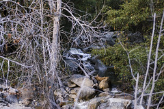 Winter Stream (rschnaible (Not posting but enjoying your posts)) Tags: yosemitenationalpark yosemiten california us usa west western sierra nevada mountains outdoor landscape stream river water winter
